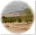 Neem_desert_blog